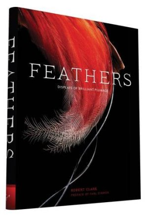 feathers ed chronicle