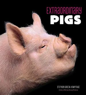 Extraordinary Pigs (R)