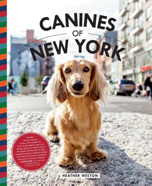 Canine of new york
