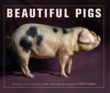 Beautiful Pigs